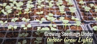 what is the best lighting for growing indoor how to grow seedlings indoor grow lights gardening