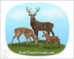 special deer family drawing