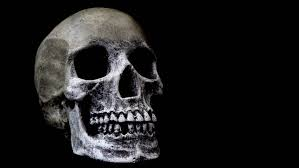 human skull on black background bones and remains of dead or
