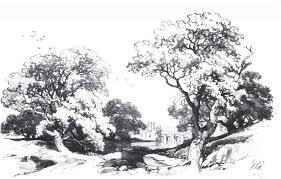 n nitropdfpro drawing trees and nature joshua nava arts