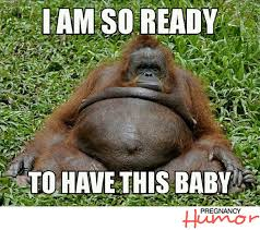 Meme Pregnant - 10 funny pregnancy memes featuring animals pregnancy humor