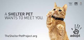 our campaign the shelter pet project