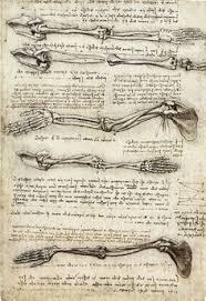 Leonardo Da Vinci Human Anatomy Drawings Drawings By Da Vinci Sarah Frances Dias Leonardo Da Vinci