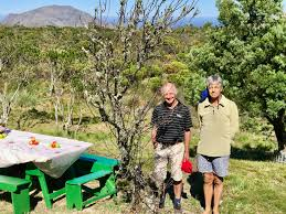 On Table by Sa Apple Industry Celebrated On Table Mountain Agriorbit