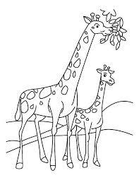 giraffe eating leaves coloring netart