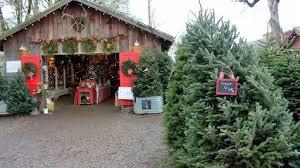 christmas tree farm oregon portland pinterest christmas