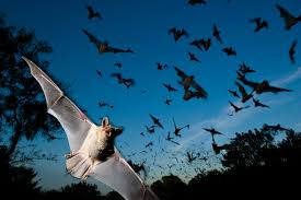 16 pictures of bats just in time for halloween