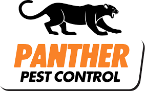 Are Spiders Attracted To Light What Attracts Spiders To Your House Panther Pest Control