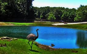 pond ostrich lakes zoo 2560x1600 wallpaper high quality wallpapers