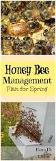 best 25 honey bee hives ideas on pinterest honey bees bee