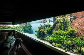 Aquascape Takashi Amano Forests Underwater By Takashi Amano Is The Lisbon Oceanarium U0027s