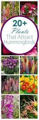 the 25 best flowers for hummingbirds ideas on pinterest