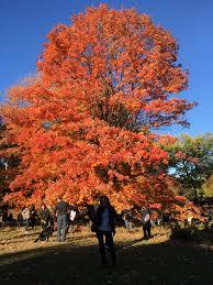 york fall simply andreea