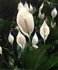 best indoor house plant houseplants that can survive in even the darkest corner best
