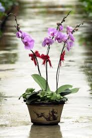 cny flowers and plants traditional choices you must have home