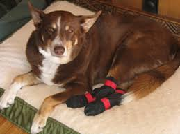 shoes slippers and boots for dogs that slip on smooth indoor