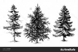 drawing realistic trees branching out learn how to draw a