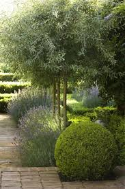best 25 small trees ideas on pinterest landscaping trees