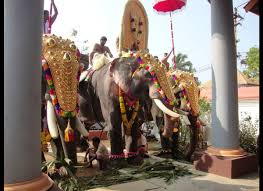 seeing the mistreatment of elephants in india was haunting gods