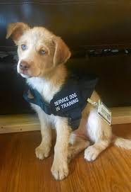 How Does A Guide Dog Help A Blind Person How To Train Your Service Dog Without A Professional Trainer