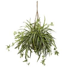 Spider Plant Nearly Natural 20 In Spider Plant Hanging Basket 6846 The Home