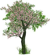 the blessing of the trees daily halacha based on the rulings of