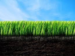 concimazione tappeto erboso concime per prato concime consigli per concimare il prato