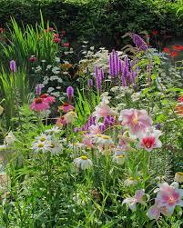 een natuurlijk groeiende tuin met groene en kleurrijke begroeiing