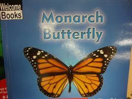 monarch butterflies kristen u0027s kindergarten