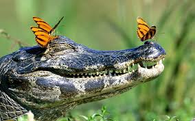 butterflies tears from turtle and alligator look