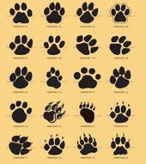 16 best paw print tattoos for images on