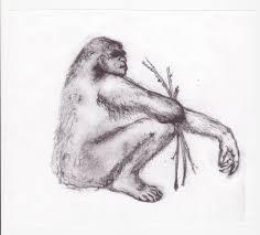 the australian hairy man australian gorilla australian bigfoot