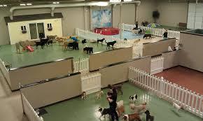 Pet Daycare Buscar Con Google Dog Day Care Pinterest Pet