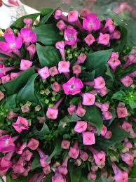 wholesale flowers near me 323 best flower varieties pink flowers images on