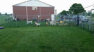 Backyard Brawlers Sara U0027s Playful Pals Kennel U0026 Training Llc Pet Service New