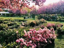 Brooklyn Botanic Gardens by Postcard From Brooklyn Botanic Garden C U0027est Christine