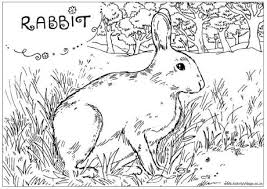 Wild Rabbit Colouring Page Rabbit Colouring Page