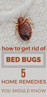 How Long Can Bed Bugs Live Without Air Best 25 Bed Bug Remedies Ideas On Pinterest Bed Bug Spray Bed