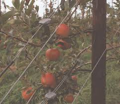 vineyard orchard u0026 fencing quick links gripple