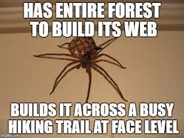Spider Meme - scumbag spider memes imgflip