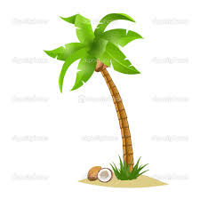 coconut clipart kid pencil and in color coconut clipart kid