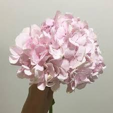 hydrangea bouquet pink hydrangea lush bouquet lou flower studio