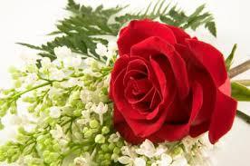 cheap flower cheap funeral flowers