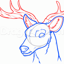 how to draw a deer head step by step forest animals animals