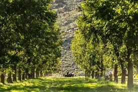 Seeking Ranch Government Seeking From Polygamous Sect Who Picked Pecans In