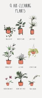 best plants for air quality feng shui fake plants in bedroom best indoor for air purification