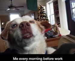 Funny Dog Face Meme - morning is hard