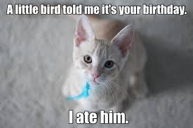 Unhappy Cat Meme - a little birdie told me it s your birthday i ate him