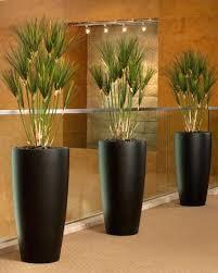 plants home decor u2013 dailymovies co