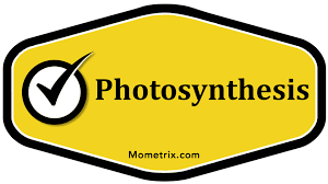 photosynthesis biology youtube
